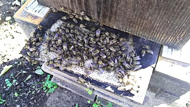 元旦の蜜蜂